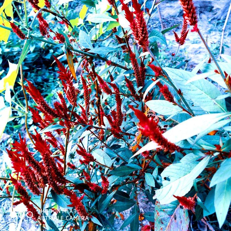 PicsArt_11-28-01.21.58.jpg