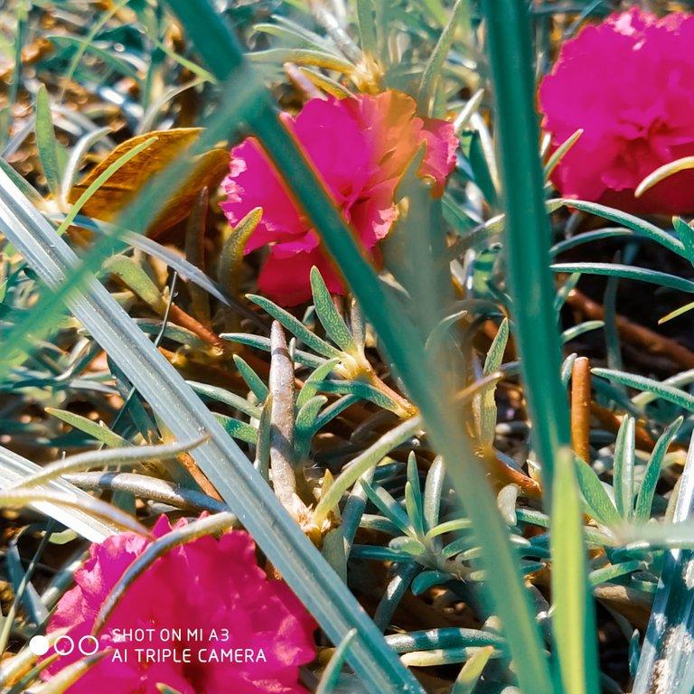 PicsArt_11-28-01.26.48.jpg