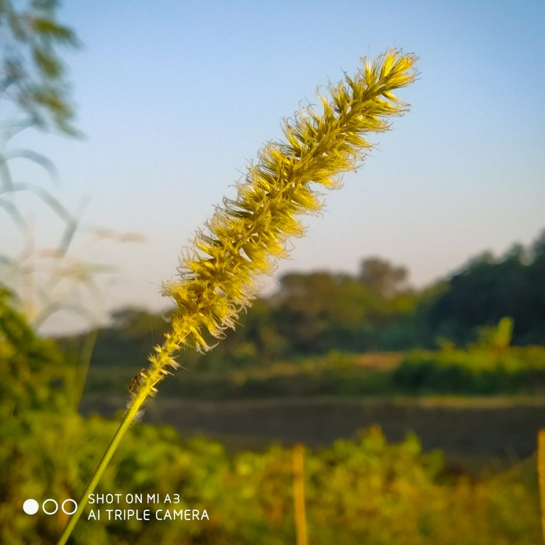 PicsArt_11-27-05.14.07.jpg
