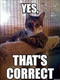 Image result for correct cat meme
