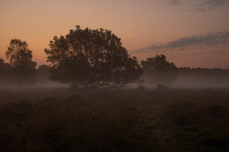 Linwood warren sunrise sept 20200136.jpg