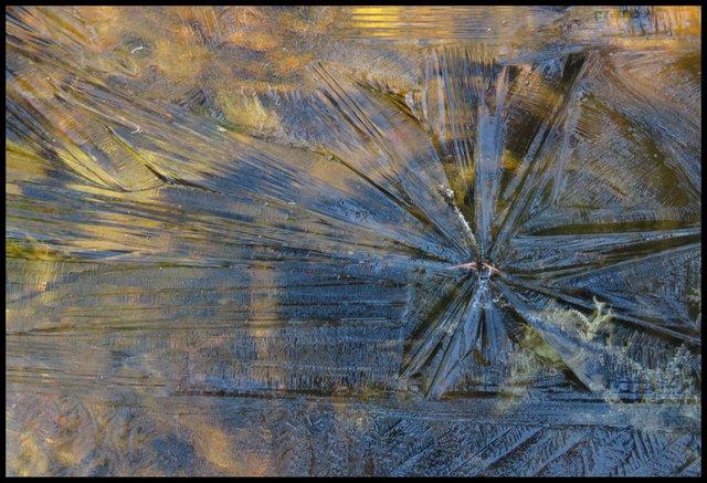 ice pattern on plant makes star shape.JPG
