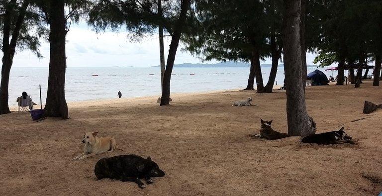 pattaya_beach_oct_2020_507.jpg