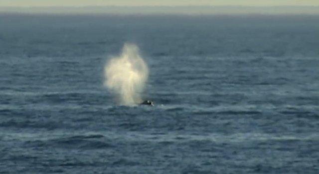 02.-Whales in Patagonia.jpg