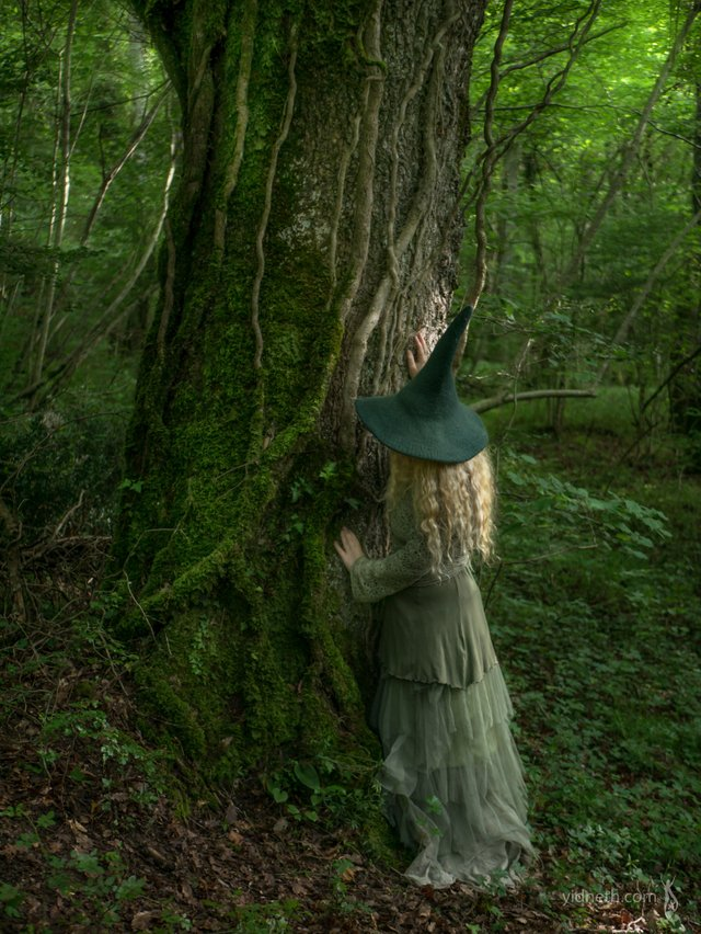 witch  in the woods.jpg