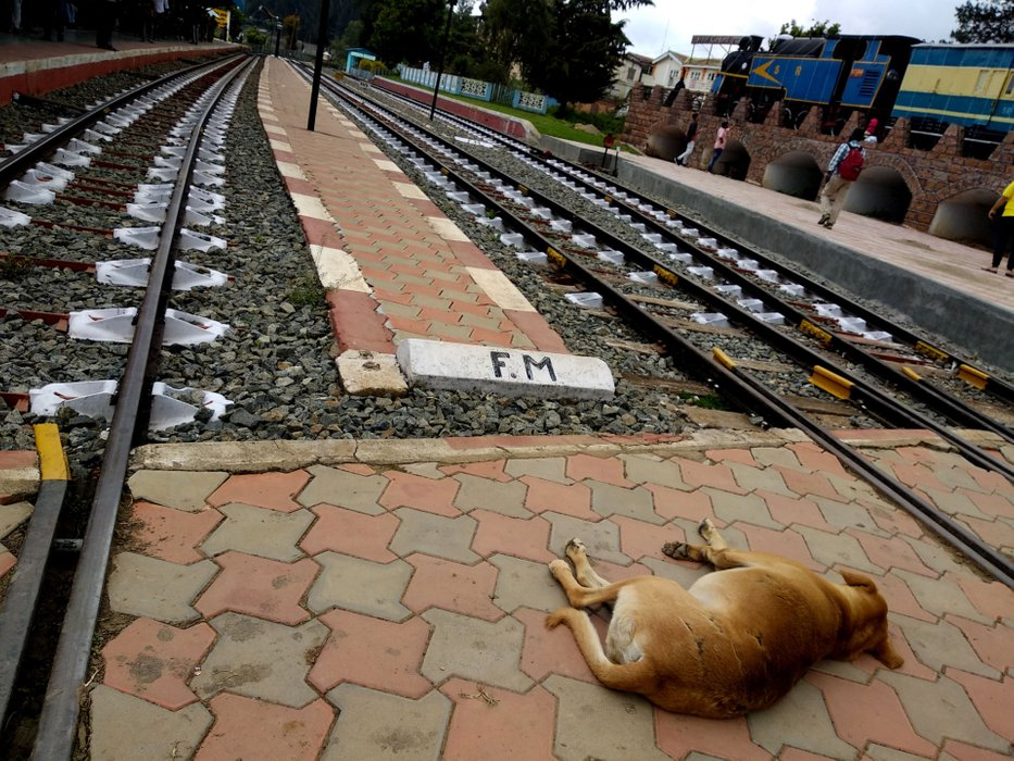 Just look at him or her, right in the middle of the tracks, with no care to what so ever happening around!