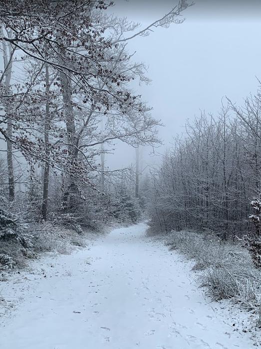 Szlak między szczytem Czupel a Magurką Wilkowicką