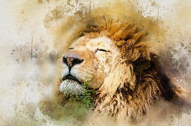 lion-1577197_640.jpg