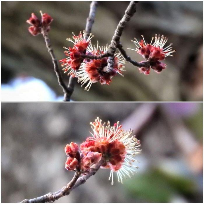treetuesday5-4-2021-11ok.jpg