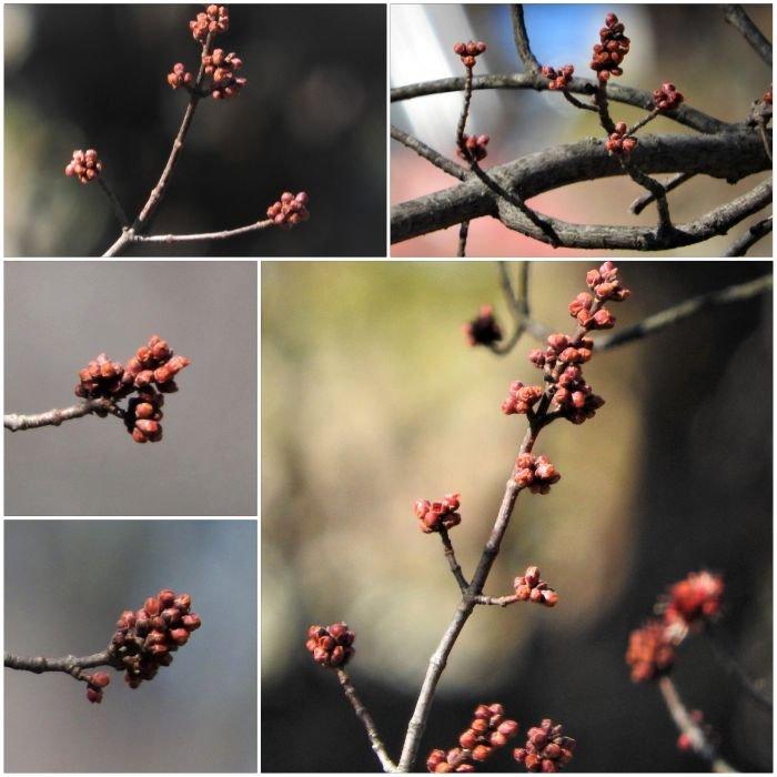 treetuesday5-4-2021-10bok.jpg