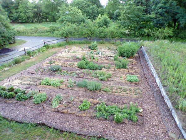 New Herb  after the rain crop June 2020.jpg