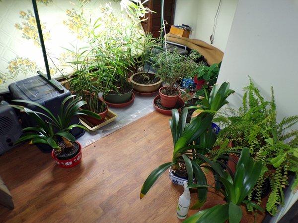House plants in spare room crop July 2020.jpg