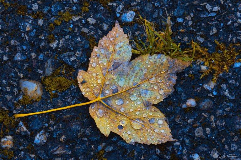 Autumn Leaves / Autumn Colors
