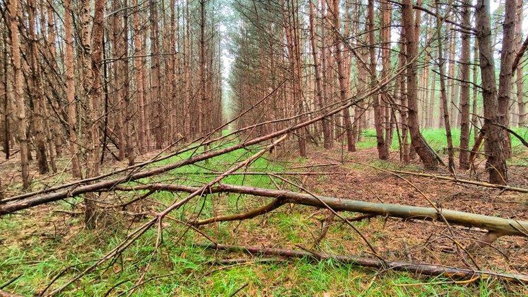 "The dark wood has forgotten the ""Kolonnenweg""."