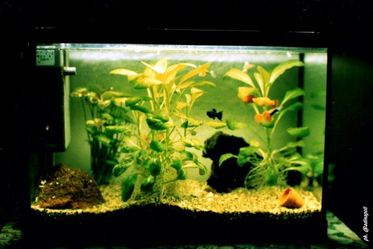 A aquarius.jpg