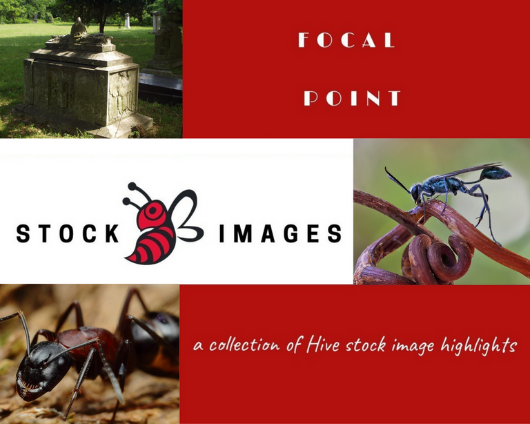 StockImages4.png