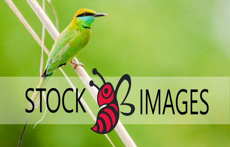 StcokImages1.jpg