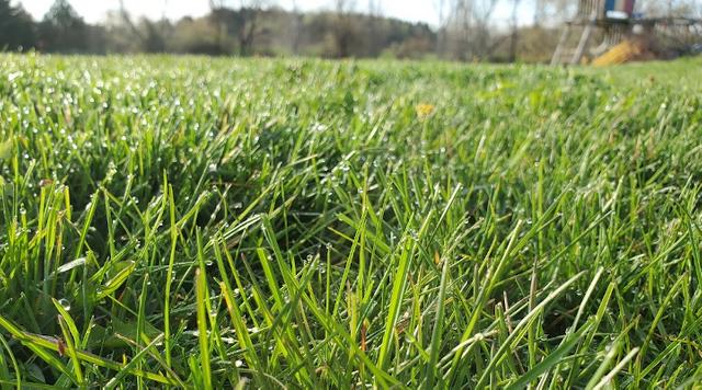 Grassupclose.png
