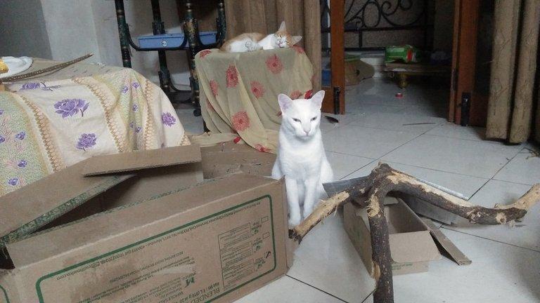 catnarrator.jpg