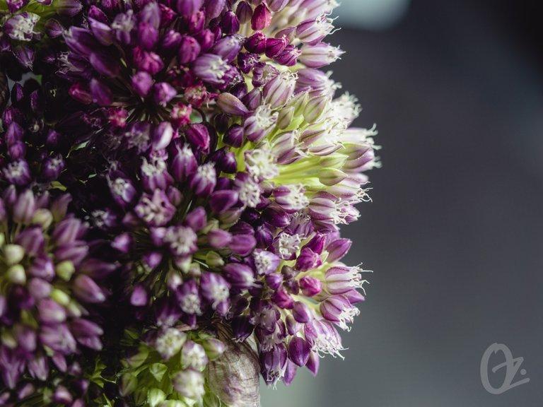 blossom110.jpg