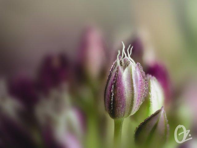 blossom114.jpg