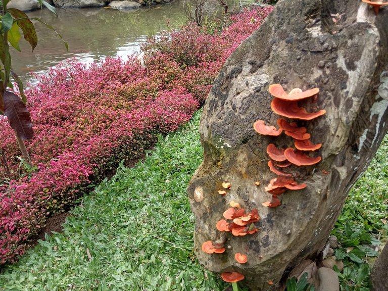 jamur2.jpg