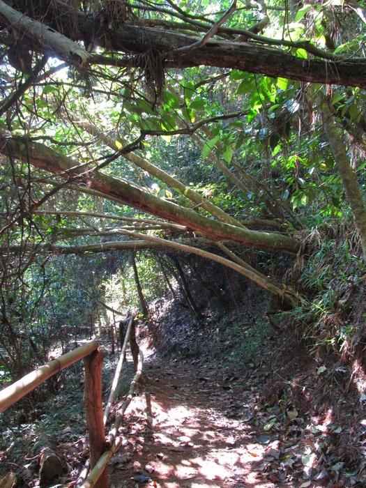 Ścieżka prowadząca do wodospadu