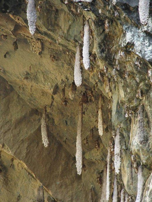 Dziwne sople w kształcie plastrów miodu