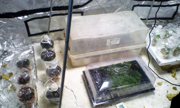 Resizer_16205003573771.jpg