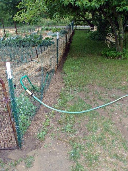 Big garden  west perimeter finished crop June 2020.jpg