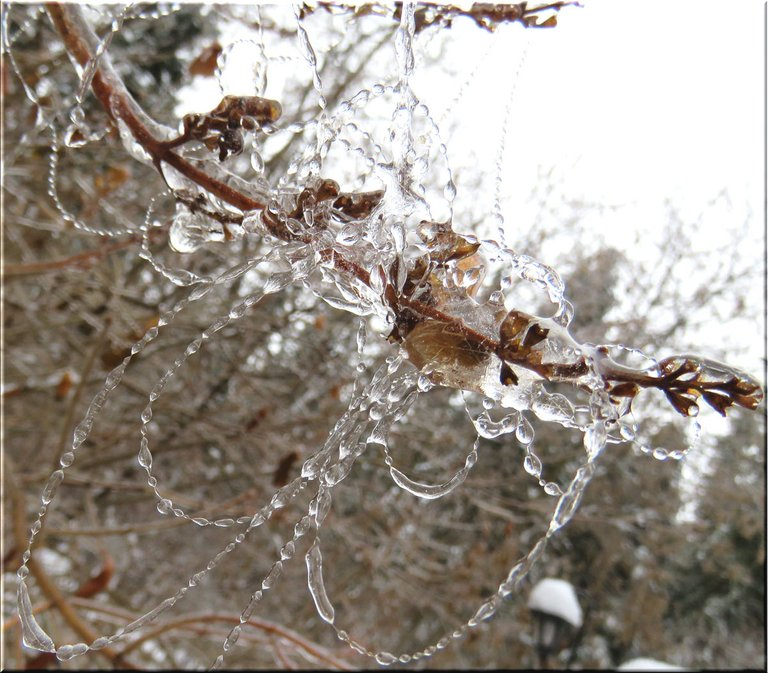 spider web on lilac branch jewelled with frozen raindrops.JPG