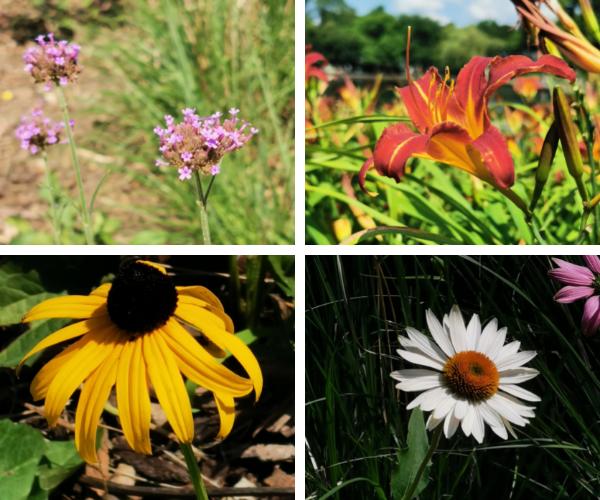 park flowers.png