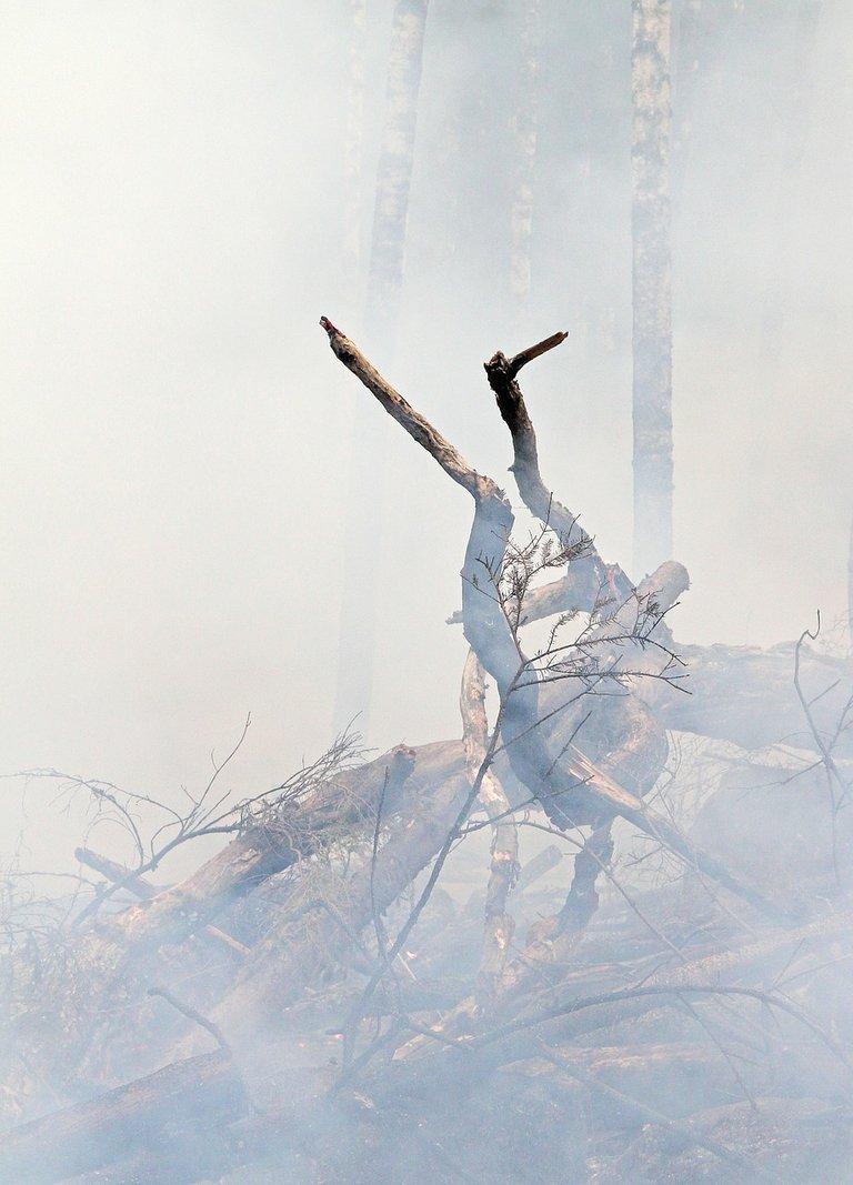 forest-fire-424425_1280.jpg