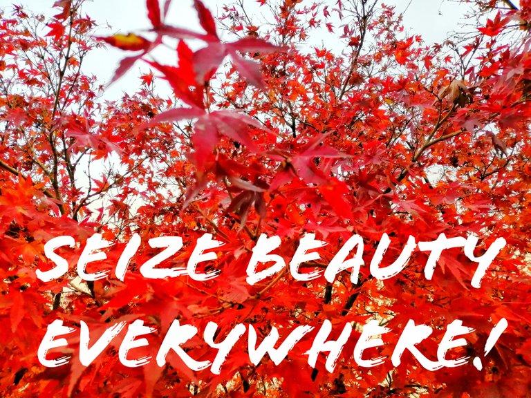 Seize beauty everywhere!