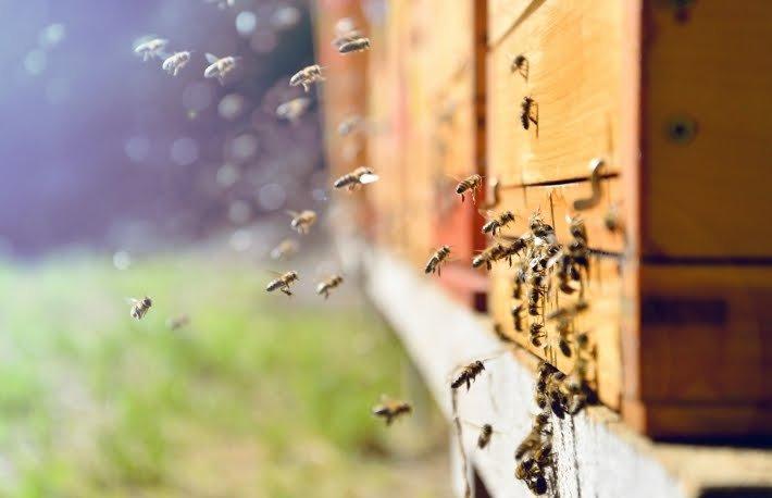 Beesandhive710x458.jpg