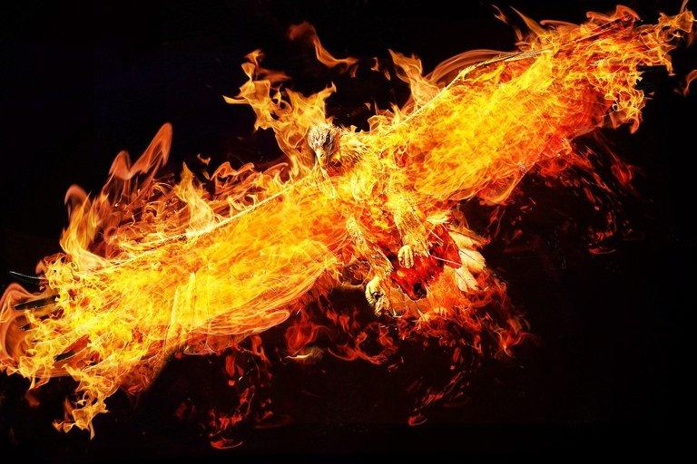 phoenix2877486_1280.jpg