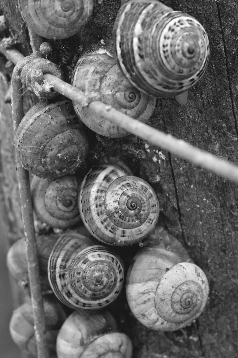 snail shells pole bw 2.jpg