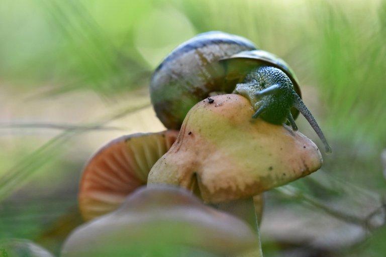 snail mushroom garden 5.jpg