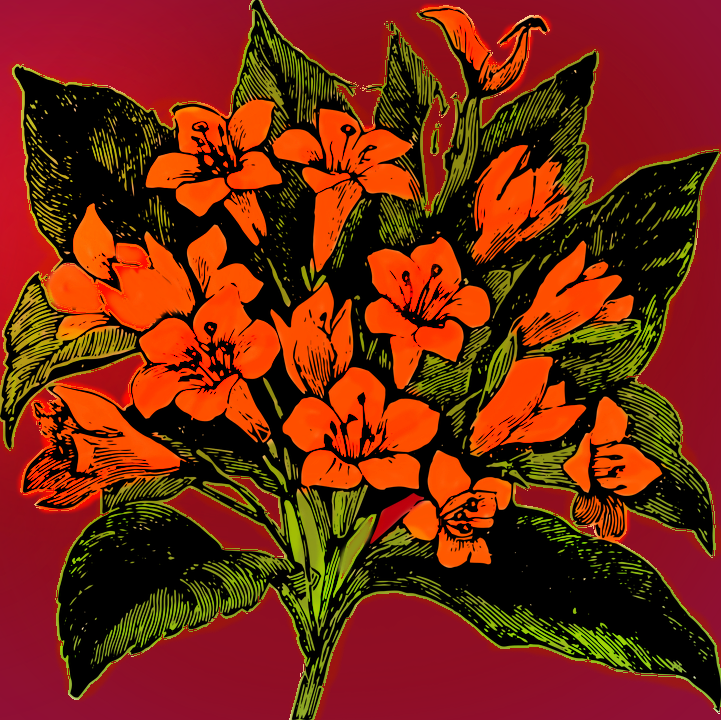 flower4148439_960_720.png
