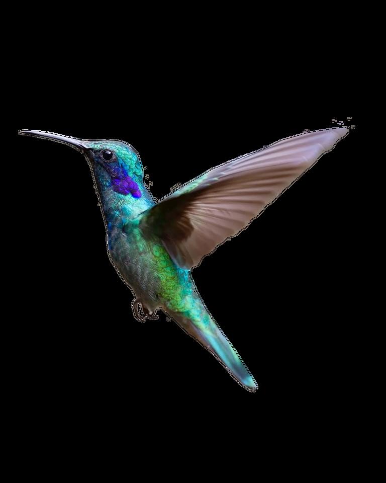 hummingbird_alone.png