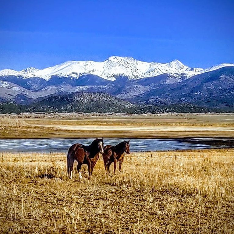 two horses by the lake.jpg