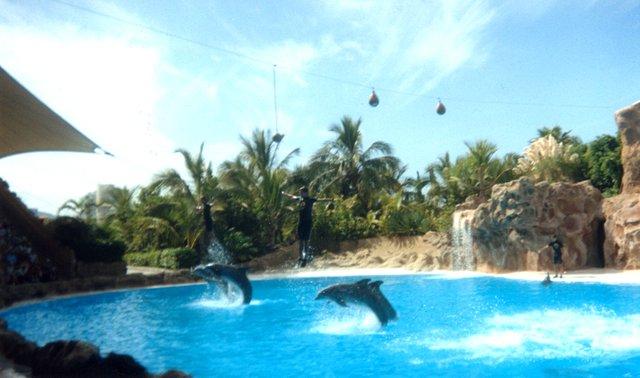 Delfines Loro Parque.jpg