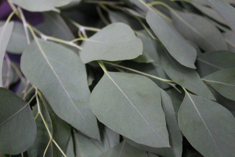 https://www.etsy.com/listing/716272576/5-oz-organic-eucalyptus-leaves-on