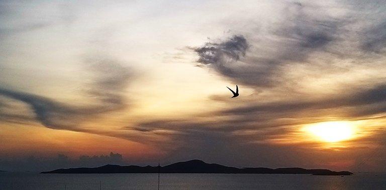 bird_8u.jpg