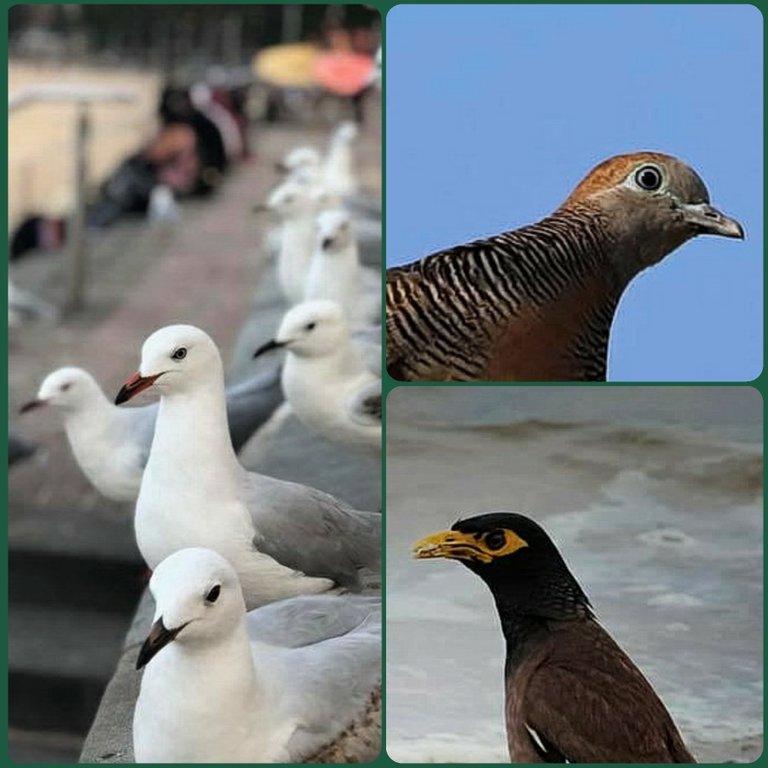 bird_9u.jpg