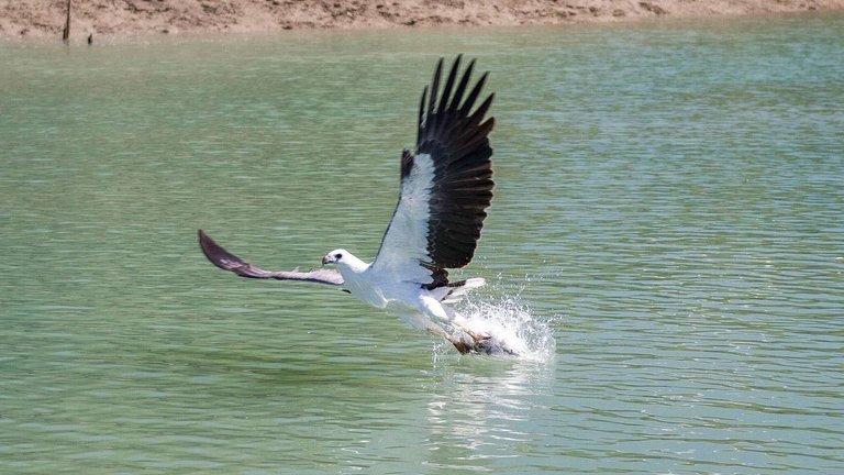 eagle_5.jpg
