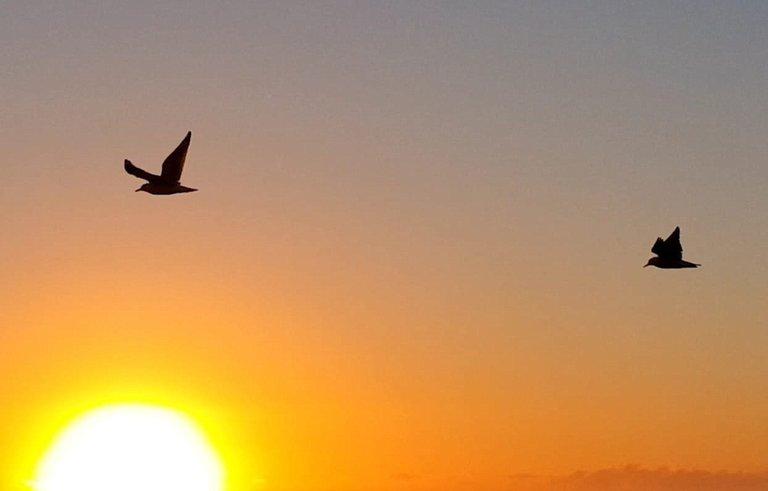bird_3u.jpg