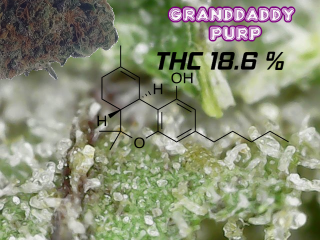 gdp_thc.png