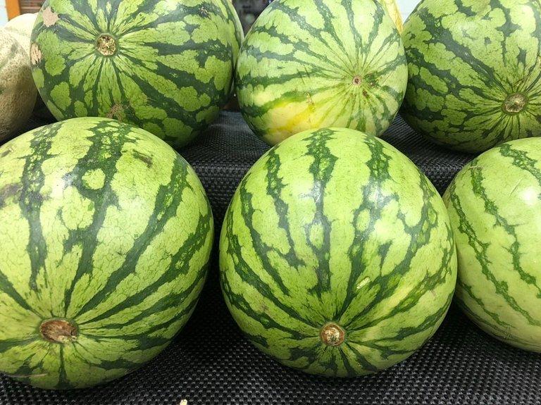 melon_4.jpg