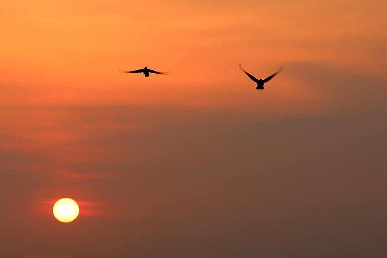 bird_29.jpg